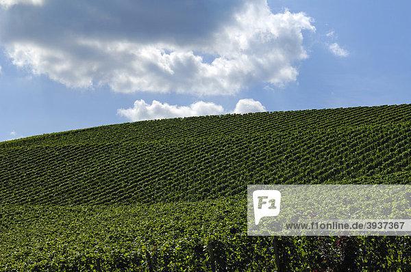 Weinberg gegen Wolkenhimmel  Durbach  Baden-Württemberg  Deutschland  Europa