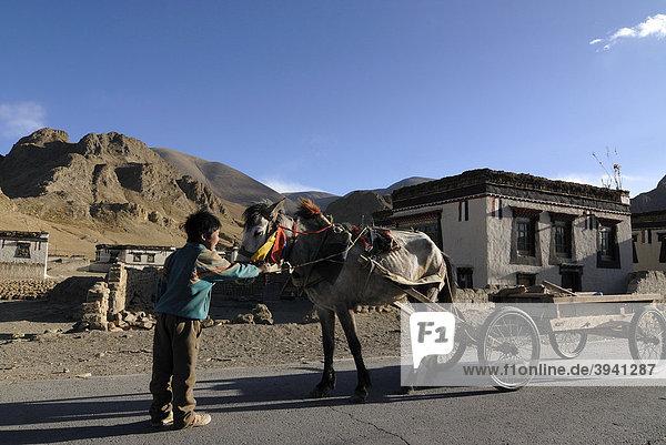 Tibetischer Nomadenjunge hält geschmücktes Pferd am Zaumzeug  Pferdekutschwagen vor traditionellen tibetischen Bauernhäusern mit Sakyafarbgebung  Tingri  Tibet  China  Asien