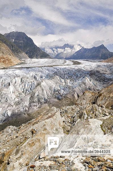 Aletschgletscher  dahinter Großes Wannenhorn und Kleines Wannenhorn  Berner Hochalpen  Wallis  Schweiz  Europa