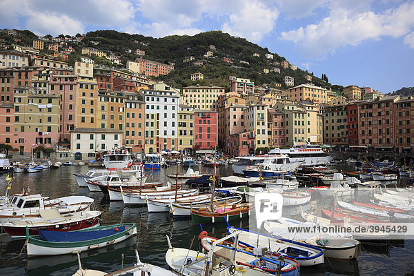 Camogli in der Provinz Genua  am Golfo Paradiso an der Riviere di Levante  Fischerhafen  Ligurien  Italien  Europa