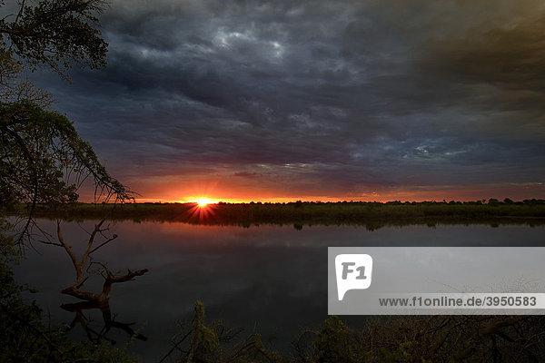 Sonnenaufgang  Okavangodelta  Botsuana  Afrika
