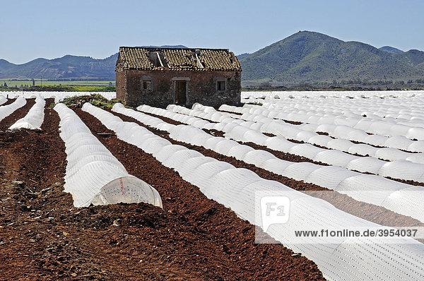 Acker  Anbau  Plantage  Haus  Plastikplanen  Landwirtschaft  Mar Menor  Murcia  Spanien  Europa