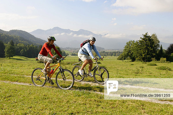 Bikers in the marsh of the river Loisach near Pessenbach in front of the Herzogstand and Heimgarten mountains  Upper Bavaria  Germany  Europe
