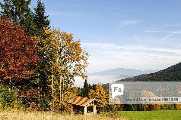 Ecksattel bei Arrach vor dem Osser  Bayerischer Wald  an der Grenze zwischen Niederbayern und Oberpfalz  Bayern  Deutschland  Europa