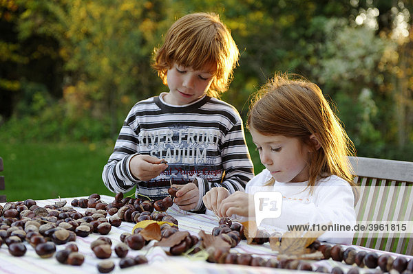 Mädchen und Junge spielen im Garten mit Kastanien  Kastanienfiguren  Kastanienmännchen