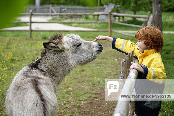 Junge streichelt einen Esel