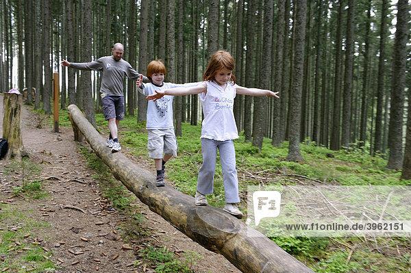 Kindererlebnisweg Wanderweg bei Rothaus  Breisgau  Hochschwarzwald  Schwarzwald  Baden-Württemberg  Deutschland  Europa