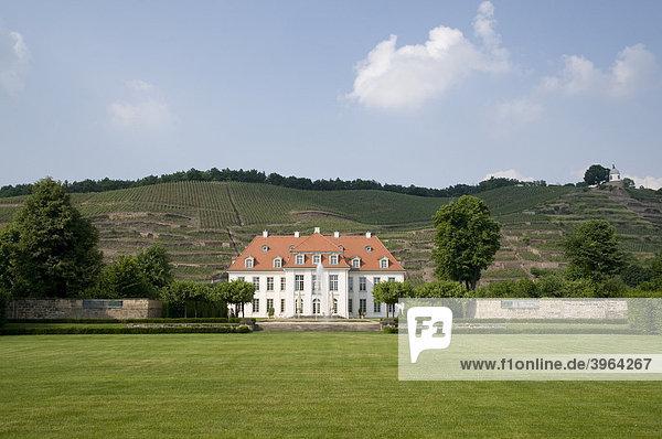 Weingut Schloss Wackerbarth  Weinberge  Radebeul bei Dresden  Sachsen  Deutschland
