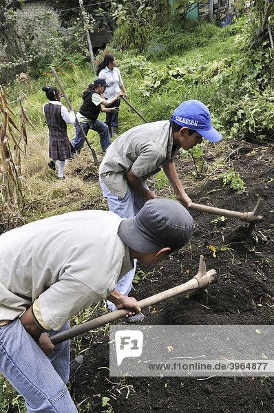 Jugendliche aus dem Armenviertel Cerro Norte werden in einem Projekt zu städtischer Landwirtschaft in Gartenbau ausgebildet  Bogota  Kolumbien