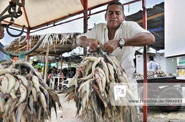 Trader weighing fish  La Dorada  Caldas  Colombia  South America