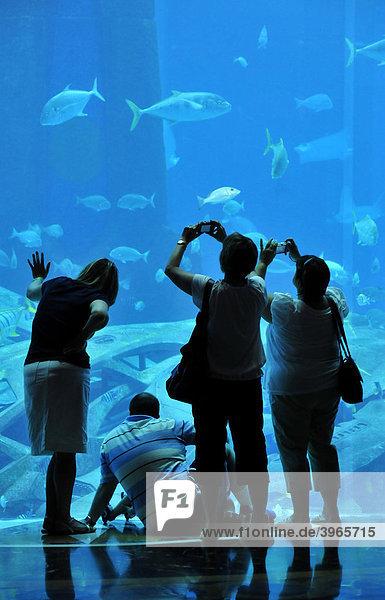Huge saltwater aquarium of the Hotel Atlantis  The Palm Jumeirah  Dubai  United Arab Emirates  Arabia  Middle East  Orient