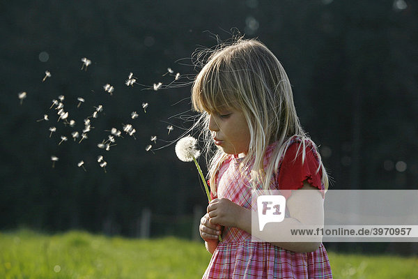 Girl with blowball