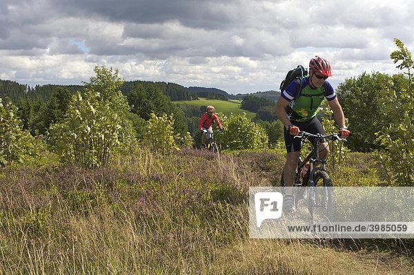Mountainbike-Fahrer auf Singletrail am Orenberg,  Willingen,  Hessen,  Deutschland