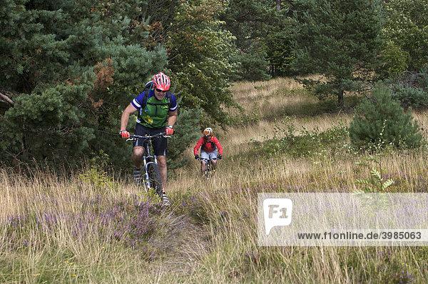 Mountainbike-Fahrer auf Singletrail am Kahlen Pön bei Usseln  Hessen  Deutschland