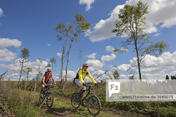 Mountain bike riders riding along the border ridgeway  deforested by cyclone Kyrill  between North Rhine-Westphalia and Hesse  north of Willingen  Hesse  Germany  Europe