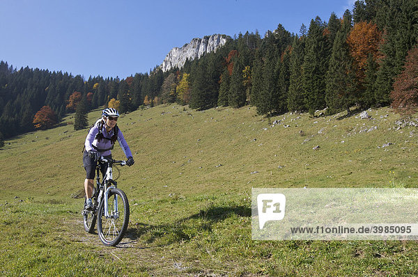 Mountain bike rider  female  in autumn on Heuberg Mountain near Nussdorf am Inn  Bavaria  Germany