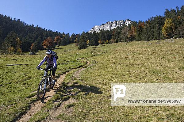 Mountain bike rider  female  in autumn on Heuberg Mountain in front of Wasserwand Mountain near Nussdorf am Inn  Bavaria  Germany