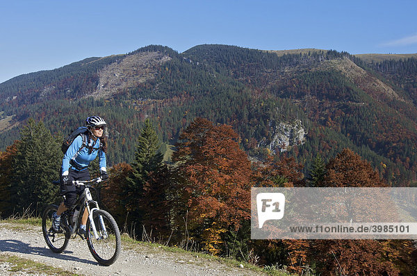 Mountain bike rider  female  in autumn on Hochries Mountain  Chiemgau Alps  Bavaria  Germany