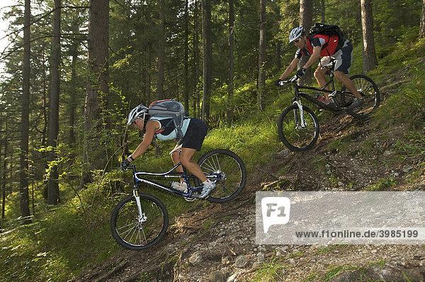 Mountainbike-Fahrerin und -Fahrer auf Wurzeltrail im Wald bei Garmisch  Oberbayern  Bayern  Deutschland