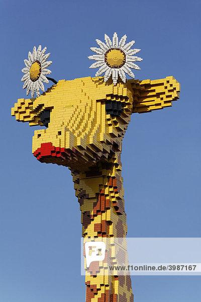 Kopf einer Giraffe aus Lego-Steinen  Legoland Discovery Center Duisburg  Innenhafen  Duisburg  Ruhrgebiet  Nordrhein-Westfalen  Deutschland  Europa Kopf einer Giraffe aus Lego-Steinen, Legoland Discovery Center Duisburg, Innenhafen, Duisburg, Ruhrgebiet, Nordrhein-Westfalen, Deutschland, Europa