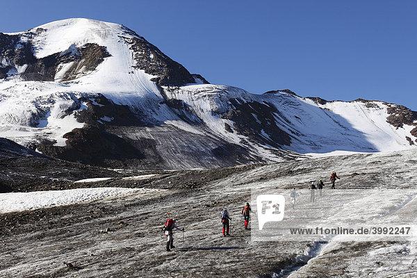 Weißseespitze  Bergsteiger-Gruppe auf Gletscher Weißseeferner  Kaunertal  Ötztaler Alpen  Tirol  Österreich  Europa