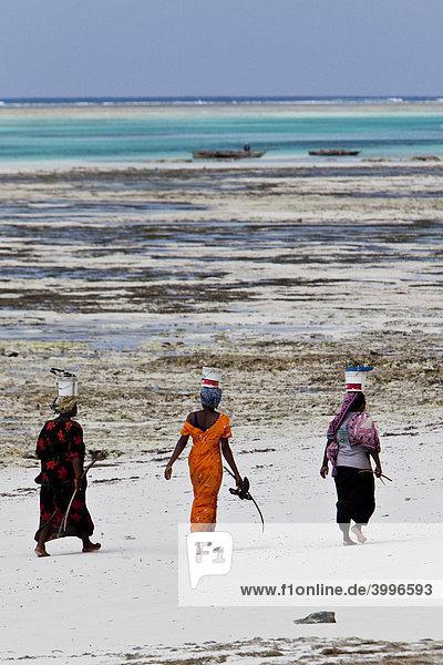Frauen tragen ihren Fischfang auf Eimern auf dem Kopf  Sansibar  Tansania  Afrika