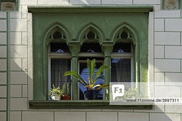 Altes dekoratives Fenster mit Säulen und Pflanzen eines Bürgerhauses  Regensburg  Oberpfalz  Bayern  Deutschland  Europa