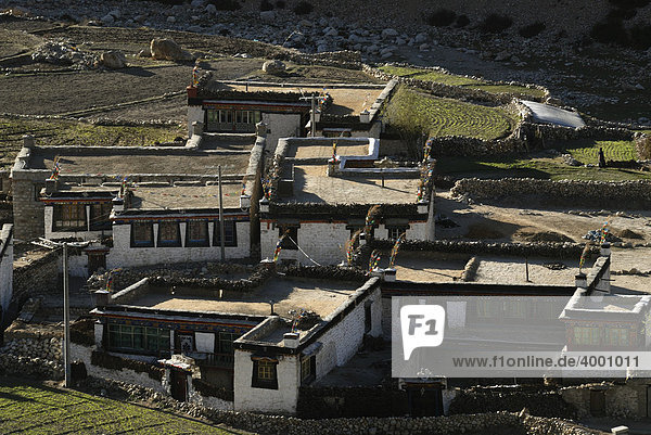 Tibetan farmhouses with Tibetan painting and yak dung for burning material drying on the compacted clay flat roofs in front of agricultural fields  with traditional irrigation system in Nyalam  Tibet  China  Asia
