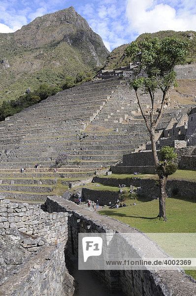Zona agricola Terrassen  Inkasiedlung  Quechuasiedlung  Machu Picchu  Peru  Südamerika  Lateinamerika