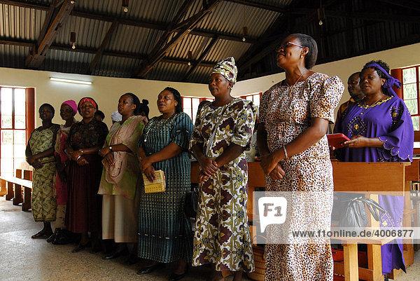 Kirchenchor in der Utondolo Lutheran Cathedral  Lushoto  Tansania  Afrika