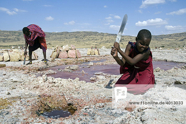 Maasai using chopping knives to extract salt slabs  soda extraction at Lake Natron  Tanzania  Africa