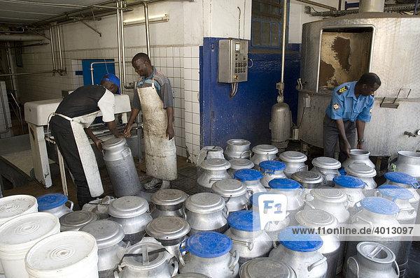 Milchannahme in einer Genossenschafts-Molkerei in Magoye  Mazabuka  Sambia  Afrika