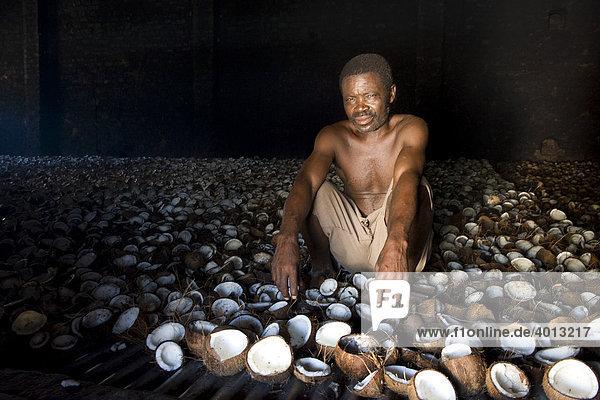 Kopra-Produktion  ein Arbeiter trocknet Kokosnüsse auf dem Rost eines beheizten Lagerschuppens  Quelimane  Mosambik  Afrika