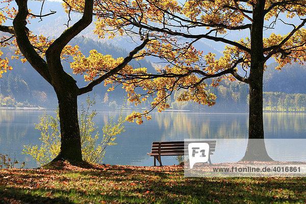 Kochelsee im Herbst  Bayern  Deutschland  Europa
