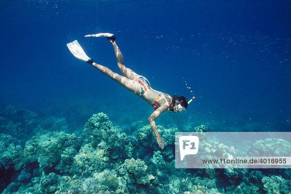 Junge Frau schnorchelt  25-30 Jahre  Korallen  Havelock Island  Andamanen  Andamanen See  Indien