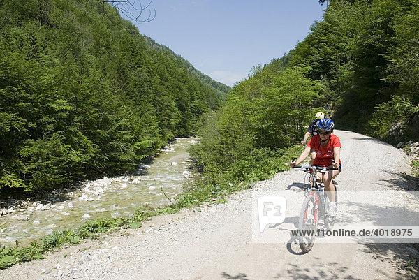 Radfahren auf der Waldbahnstraße  Nationalpark Kalkalpen  Oberösterreich  Österreich  Europa
