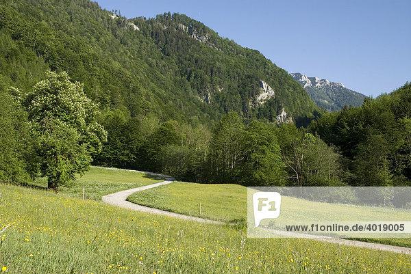 Bodinggraben  Nationalpark Kalkalpen  Oberösterreich  Österreich  Europa