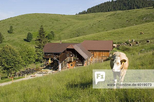 Anlaufalm  Nationalpark Kalkalpen  Oberösterreich  Österreich  Europa