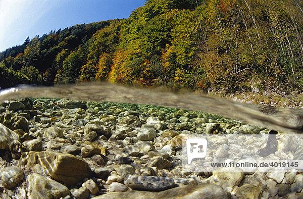 Herbsttag am Reichramingbach  Nationalpark Kalkalpen  Oberösterreich  Österreich  Europa