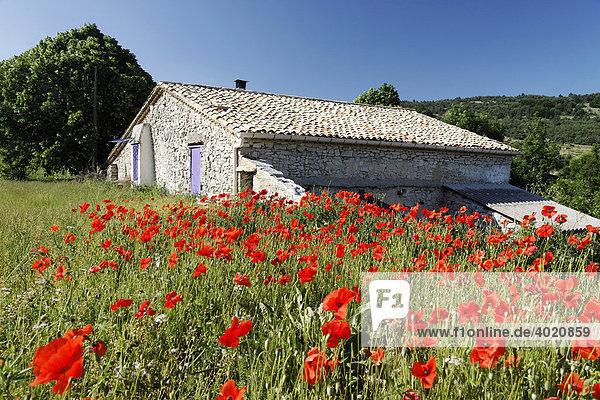 Mohnblumenfeld mit einem alten Sandsteinhaus  Provence  Frankreich  Europa