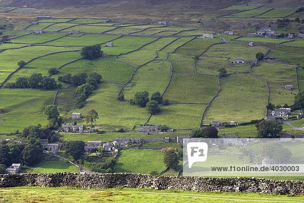 Grüne Felder und Bauernhofhäuser in Swaledale  Yorkshire  Vereinigtes Königreich  Europa