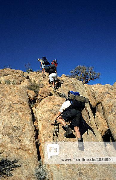 Wanderer am Brandberg  Namibia  Afrika