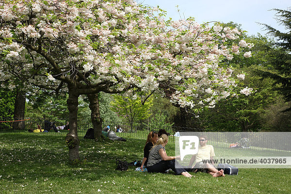 Leisure activities in Hyde Park  London  England  Great Britain  Europe
