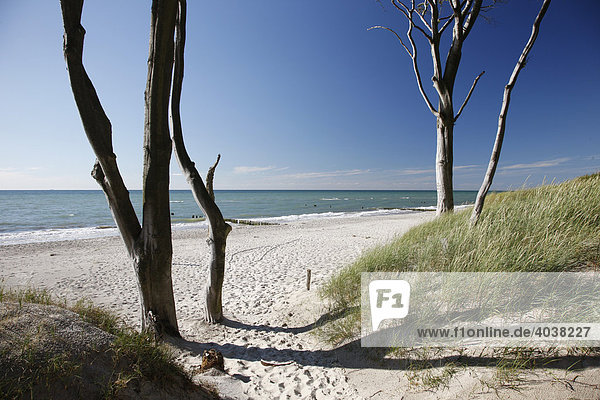 Dünen  Esper Ort  Darß  Ostsee  Nationalpark Vorpommersche Boddenlandschaft  Mecklenburg-Vorpommern  Deutschland  Europa