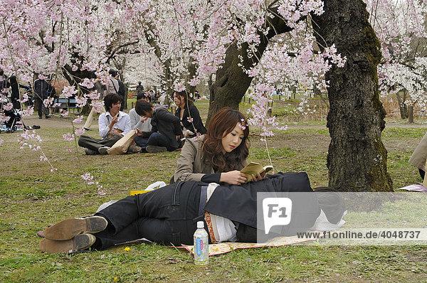 Junges Liebespärchen unter blühenden Kirschbäumen während des Kirschblütenfestes im botanischen Garten  Kyoto  Japan  Asien