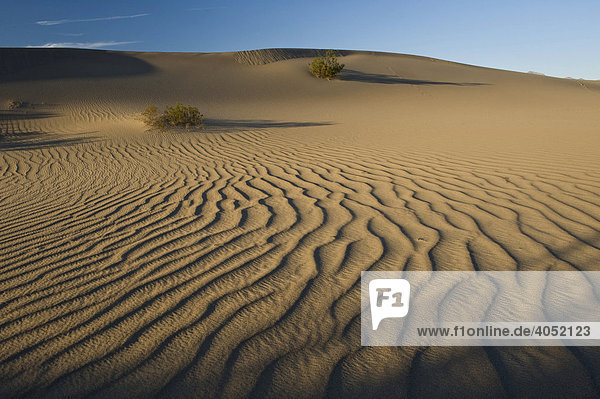Mesquite Flat Dunes  Death Valley  California  USA