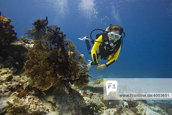 Girl scuba diving behind a Gorgonian  Sea Whip or Sea Fan (Gorgonacea)  Indonesia  Southeast Asia