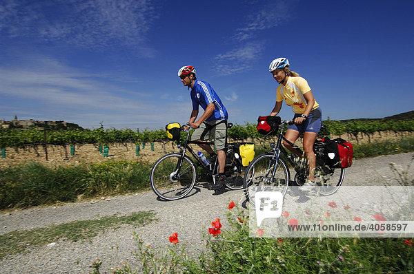 Radfahrer in der Provence  Frankreich  Europa
