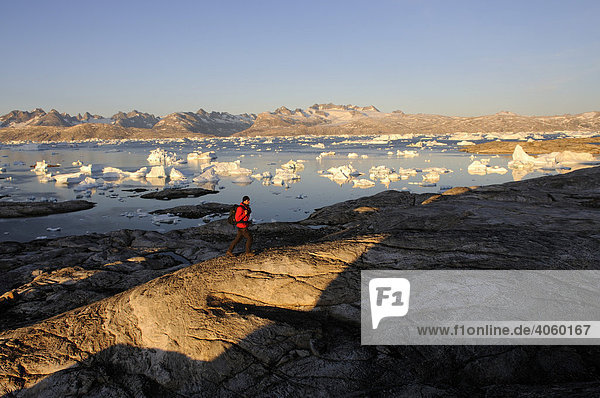 Hiker hiking in Stoklund Fjord  East Greenland  Greenland