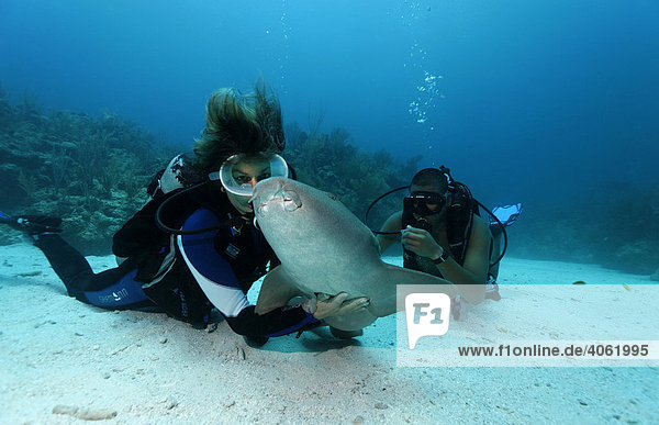 Taucherin streichelt Karibik-Ammenhai (Ginglymostoma cirratum)  spezielle Berührung auf Unterseite lässt Hai in Apathie fallen  Barriereriff  San Pedro  Insel Ambergris Cay  Belize  Zentralamerika  Karibik